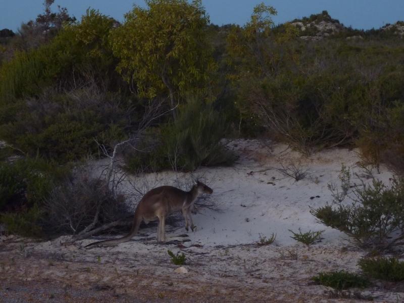 australien_043