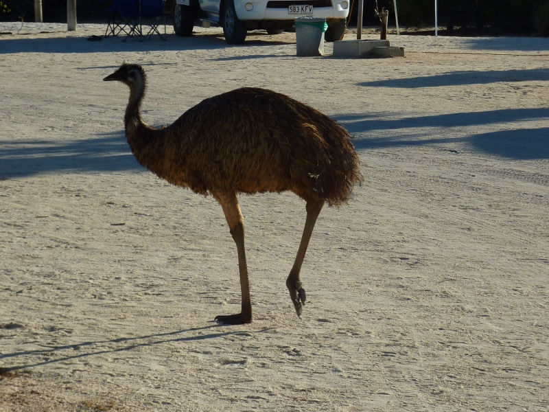australien_052