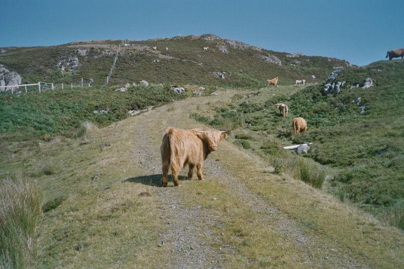 Schottland_D31