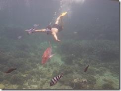 Schwimmen mit den Fischen